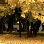 10月の瞑想会