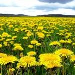 meadow-1351101-639x428
